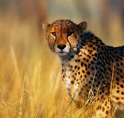 动物世界:人与动物奥运大比拼