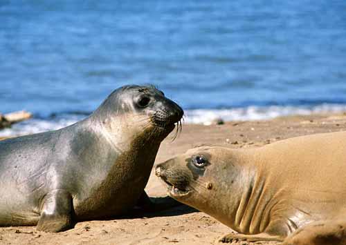 壁纸 动物 海洋动物 桌面 500_355