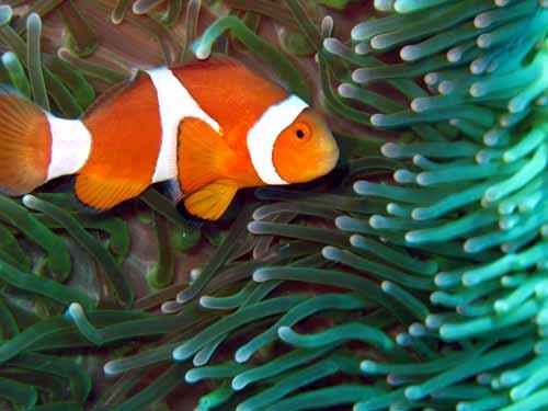 小丑鱼 海底总动员 cctv.com