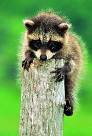 动物世界:我不能离开的家乡