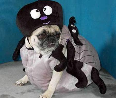 diy动物服装秀
