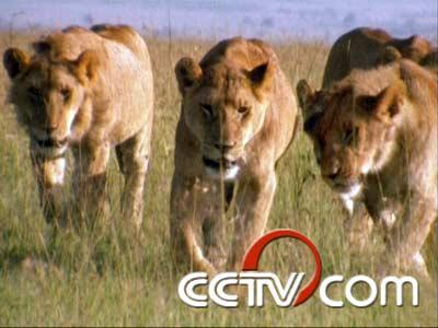 信息中心 动物世界全385集,央视拍了20年~   全世界哺乳类动物约有