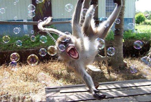 动物一疯狂 准能笑死人[图] - 理想 - 理想的博客
