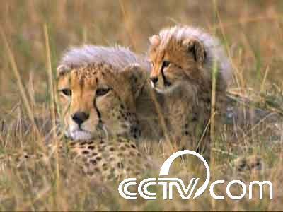 央视的动物世界等节目好看吗?