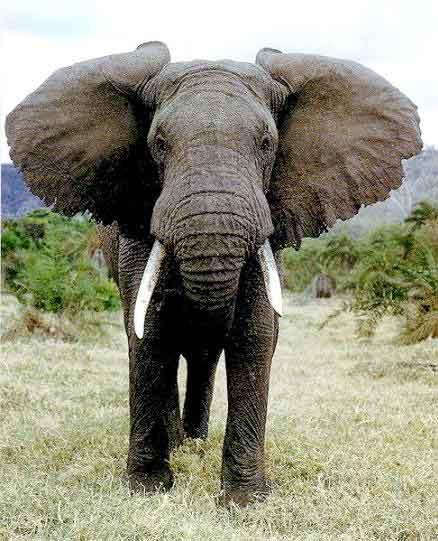 揭秘世界十大巨型动物 自然类纪录片 cctv.com