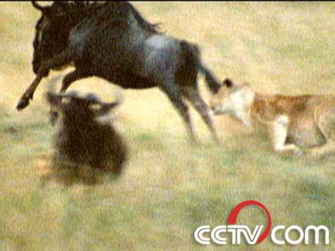 科学世界:致命动物之生死对抗