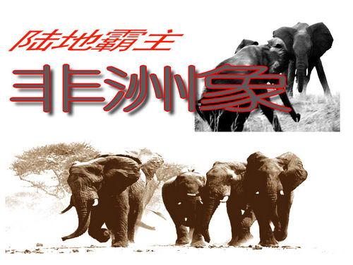 陆地霸主—非洲象(上)