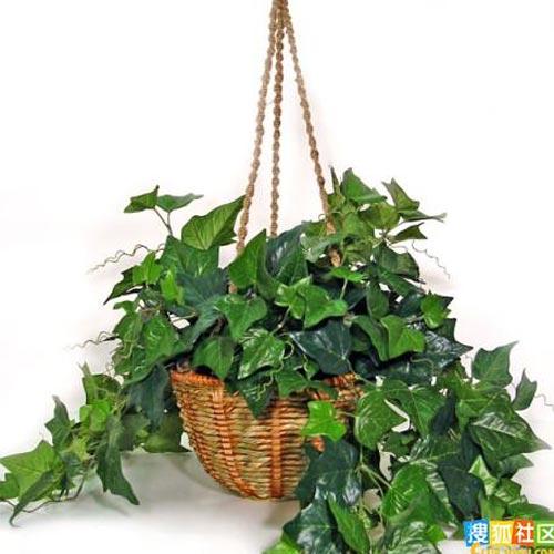 净化室内空气最好的十种植物 - lo.veyy520 - lo.veyy520的博客