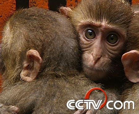 致富经090515福建动物园 - le20110901 - le20110901的博客