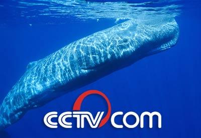 世界地理 抹香鲸爆炸事件
