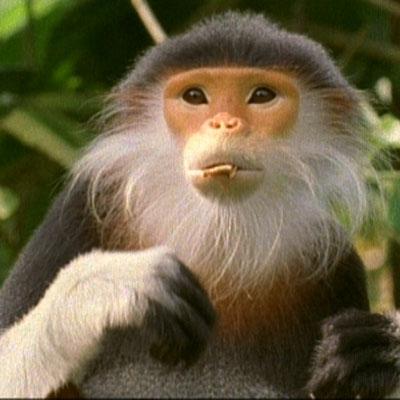 稀有猴子图片大全