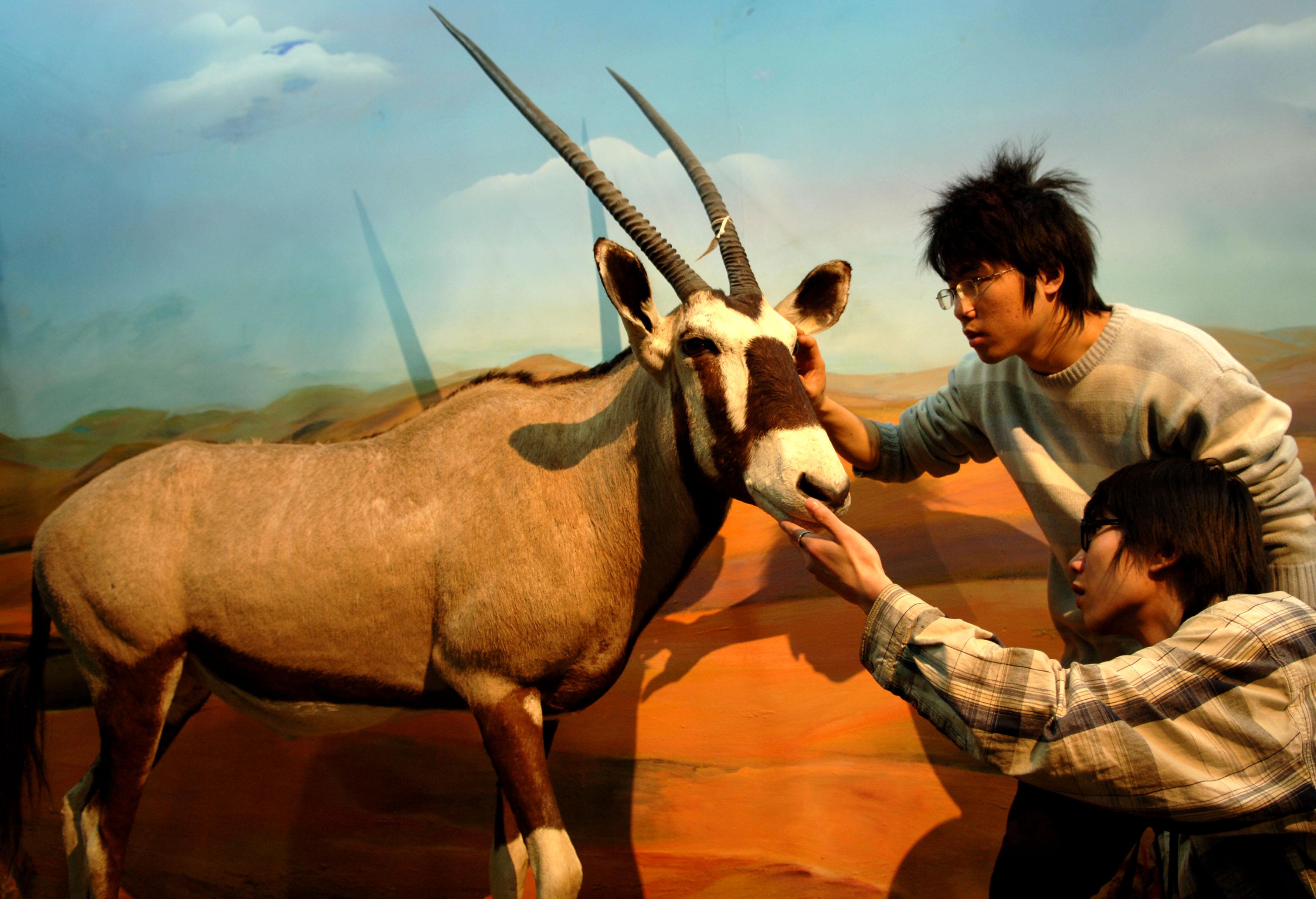 """""""动物之美--贝林捐赠世界动物标本展""""简介"""