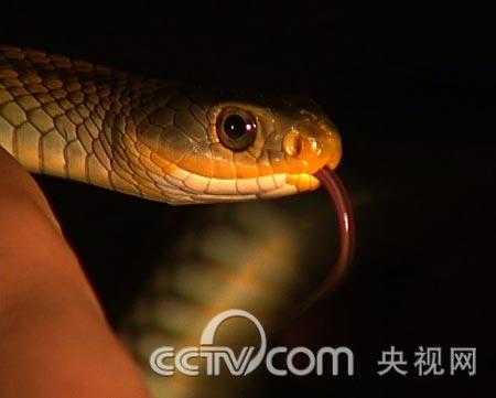 [致富经]神秘黑蛇的财富悬念(2009.7.22/23)