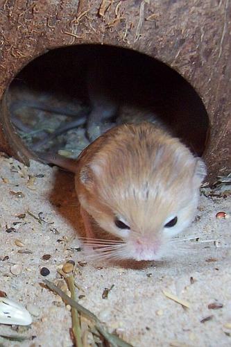 世界上最小的哺乳类动物