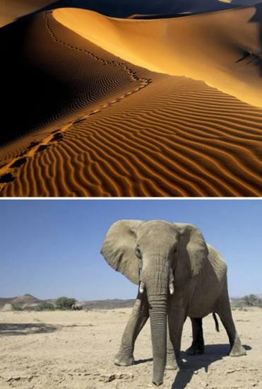 壁纸 大象 动物 沙漠 桌面 371_550 竖版 竖屏 手机