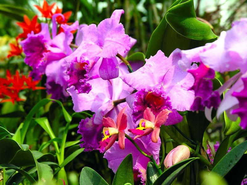 关键词:花卉图片及名称大全,花卉图片大全,花卉图片-绑的最紧