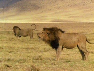 动物世界:《生命之舞》系列