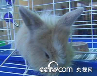 肉禽蛋 兔业市场2009(4)以小受宠的兔子  解说:你看这些长相可爱的