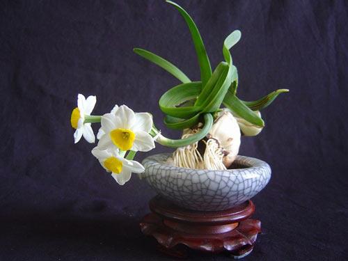 迎春水仙雕刻展